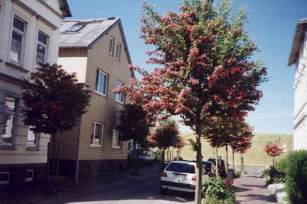 holiday flat in Cuxhaven 1